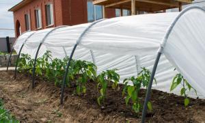 Парник Подснежника: характеристики, фото, инструкция по сборке, отзывы огородников, где купить, цена