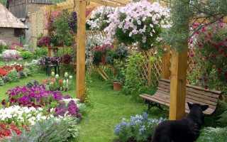 Ампельные цветы для кашпо свисающие и неприхотливые для комнаты и сада: фото и названия растений