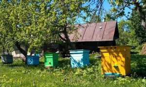 Как развести пчел в домашних условиях для начинающих с нуля: что нужно для размножения, содержание