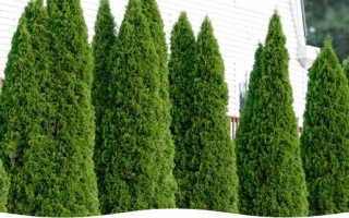 Живая изгородь на даче своими руками: из чего лучше сделать, какие растения подойдут