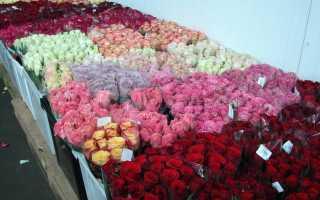 Голландские розы: лучшие сорта с фото и названиями, посадка и уход
