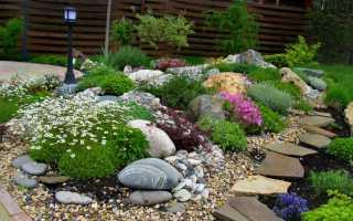 Рокарий в ландшафтном дизайне на даче или садовом участке своими руками: семь вариантов на фото