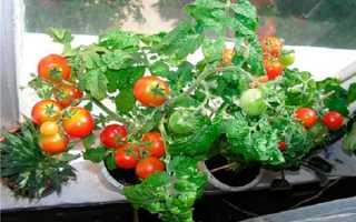 Лучшие сорта томатов в Подмосковье для открытого грунта: низкорослые, сладкие, черри, крупные, лежкие