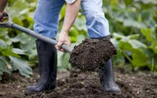 Проволочник в картошке: как избавиться от проволочника на картофельном участке, чем обработать картофель перед посадкой, препараты от проволочника
