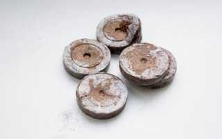 Торфяные таблетки для рассады: как пользоваться и сажать семена, где купить, как сделать в домашних условиях