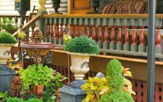 Цветы и растения для палисадника: фото и названия
