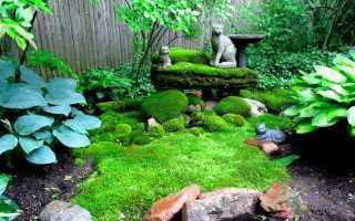 Декоративный мох: виды, названия и фото, польза или вред, цветущий для сада