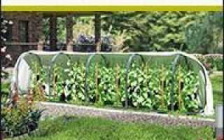 Молиния голубая Вариегата, тростниковая, Хайдебраут и другие: фото, выращивание, применение