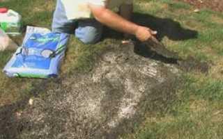Газонная трава которая уничтожает сорняки: выбор и уход за газоном