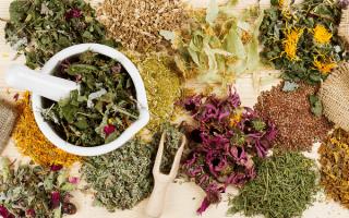 Лекарственные травы и растения для сада и домашней аптеки в картинках с названиями и описаниями
