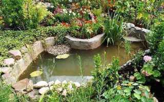 Водоёмы в саду и на даче: обустройство и посадки вокруг фото, устройство водоемов