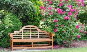 Розы и хвойники в ландшафтном дизайне: фото, правила сочетания