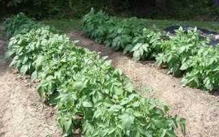 Посадка овощей по методу Митлайдера: видео, обустройство грядок с картофелем, помидорами, баклажанами – с чего начать