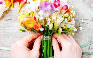 Фрезия: выращивание и уход в домашних условиях, посадка, фото цветов