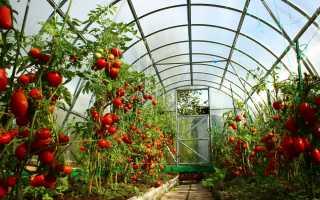 Лучшие сорта томатов для теплицы в Подмосковье: самоопыляемые, урожайные, сладкие помидоры, рейтинг по отзывам в 2020 году