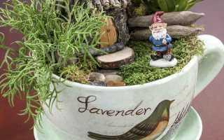 Мини-сад в горшке своими руками: композиции из комнатных цветов на фото