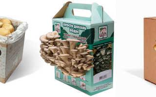 Канадская технология выращивания грибов в домашних условиях, отзывы о коробке грибницы