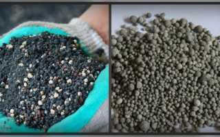 Фосфорные удобрения: виды, значение фосфора для растений, его роль, чем грозит недостаток, какие подкормки относятся к фосфатам