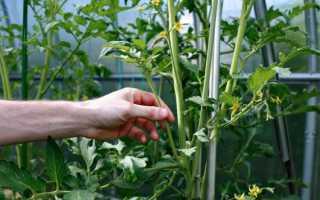 Пасынкование помидор: как правильно, схема, пошаговая инструкция для томатов в теплице и открытом грунте – видео и фото