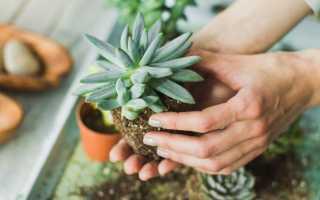 Экзотические комнатные растения: фото и название – редкие и необычные цветы, плодовые, кактусы, суккуленты