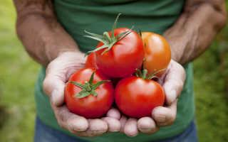 Лучшие сорта томатов для теплицы: какие помидоры самые урожайные, крупные, вкусные, выскорослые, ранние и поздние