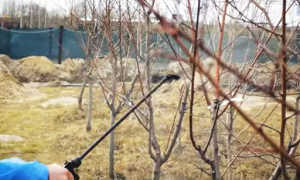 Обработка деревьев весной от болезней и вредителей: весенние обработки сада ранней весной и повторно