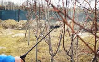 Чем опрыскивать деревья весной до распускания почек и опрыскивание сада от вредителей и болезней