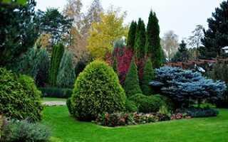 Хвойники в саду и их дизайн: варианты на фото, названия, уход за ними, правила создания красивого миксбордера
