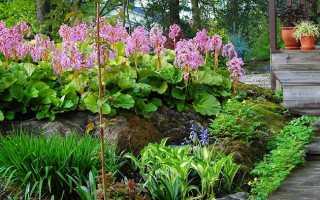 Тенелюбивые растения для сада: многолетние неприхотливые цветы растущие в тени для клумбы и огорода
