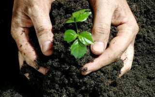 Органические удобрения, их виды и характеристики, роль, способы и нормы внесения