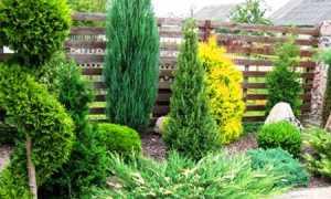 Что посадить вдоль забора на даче: деревья, кусты, растения, композиции на фото