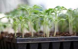Кассеты для рассады: какие купить, выращивание в агрокассетах, ячейки из-под яиц для проращивания семян