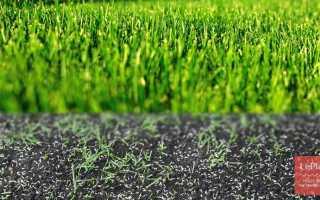 Как правильно посадить газонную траву своими руками: видео советы