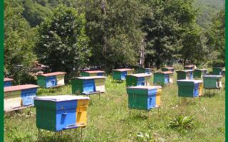 Пчеловодство как бизнес с чего начать как преуспеть: заработок на пчелах, рентабельность, выгодно ли держать пчел
