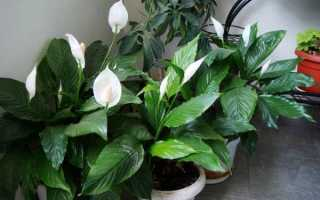 Теневыносливые растения для сада: примеры с фото и названия, список сциофитов