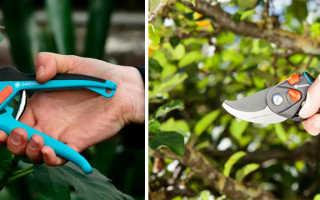 Как выбрать садовые секаторы: видео в работе основных видов