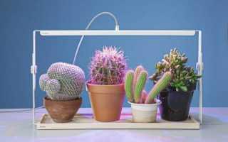 Cтеллаж для рассады с подсветкой: как сделать своими руками, как выбрать лампы и смонтировать их