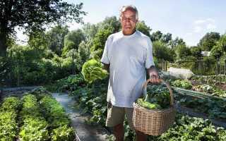Умный огород без хлопот для пожилых, ленивых: как делать урожайные грядки своими руками, фото