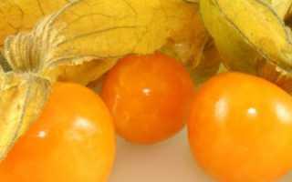 Физалис съедобный (земляничный, овощной) и декоративный: выращивание и уход, фото растения