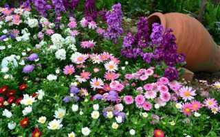 Неприхотливые цветы для дачи: фото и названия, какие посадить – однолетки и многолетние