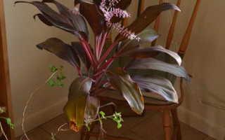 Кордилина: уход в домашних условиях, виды, фото и названия – cordyline фрутикоза, прямая, красная, верхушечная киви